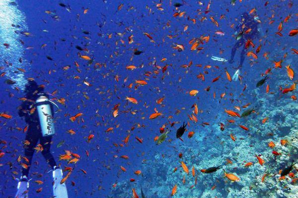 诗巴丹潜水