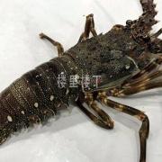 马来西亚水产品工厂在华注册名单分享给做海鲜生意的朋友