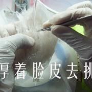 加工厂工作过程中选择湿挑法的燕窝的营养会流失吗?